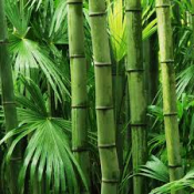 The Rise of Bamboo